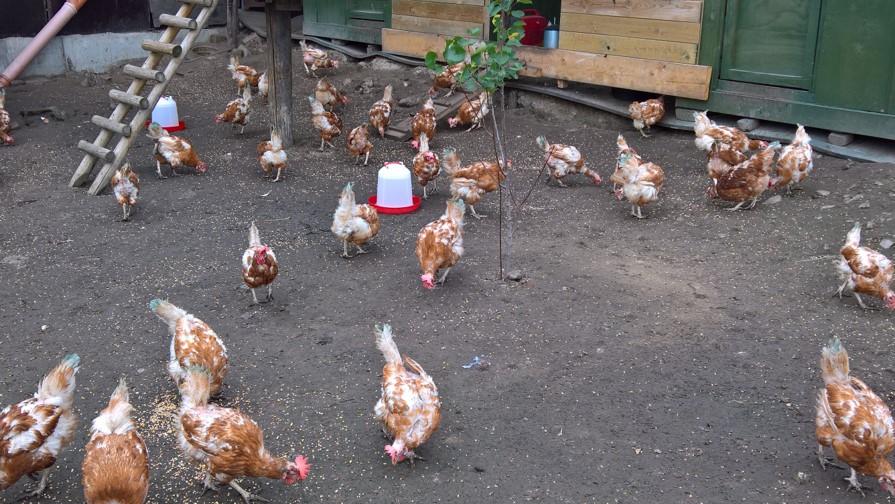 kip beter leven