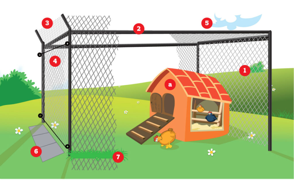 bescherm kippen tegen roofdieren met deze ren