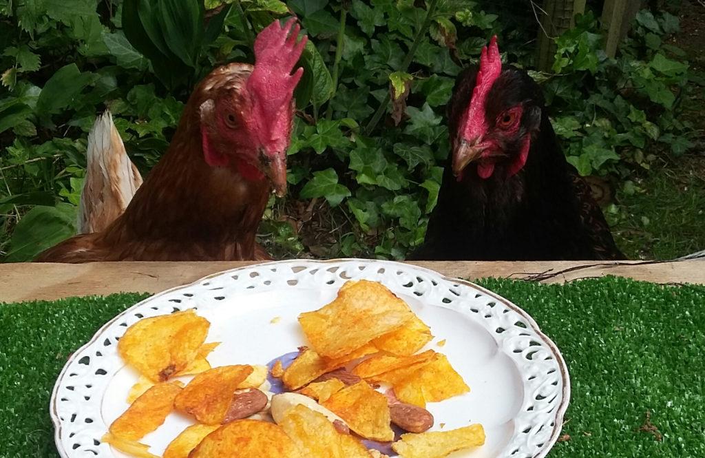 kippen benodigdheden: lekkers